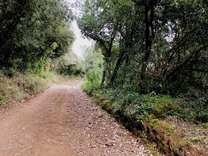 Camino entre bosque de encinas