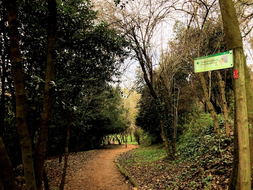 Camino a Sant Miquel