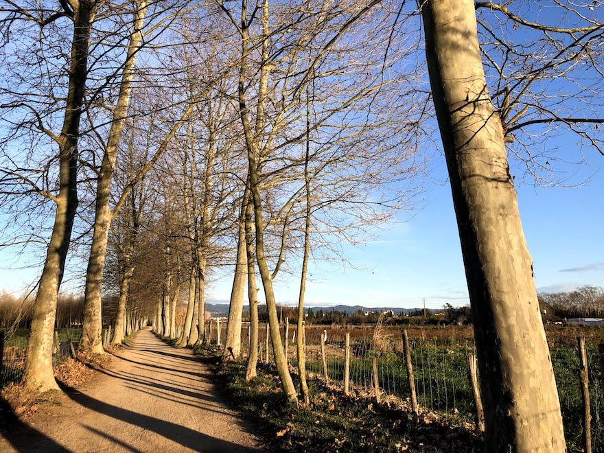 Árboles en la Ruta del carrilet